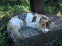 20110717_cat